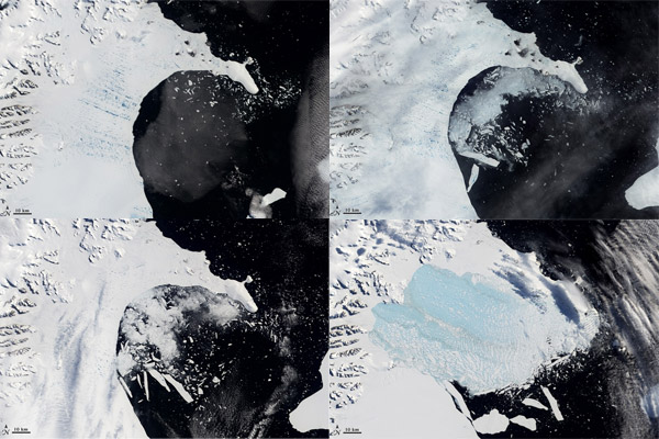 NASA satellite pictures of the breakup of the Larsen B ice shelf from Jan 31st to Mar 7th 2002. Image sequence from top left to bottom right. The blue colour in the final picture is the debris of sea ice remaining:  3,250 square kilometers, or 1,250 square miles of permanent ice has disintegrated, the largest collapse ever seen.