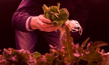 Food being grown in underground bunker. Photo: Zero Carbon Food