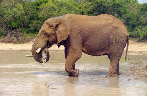 640px-elephant_loxodonta_africana_05