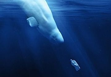 Thumbnail : Lovely, Tasty Plastic – the film A Plastic Ocean