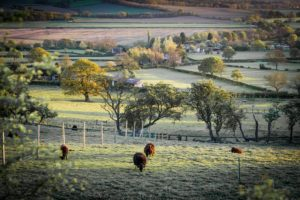 Farming and Biodiversity