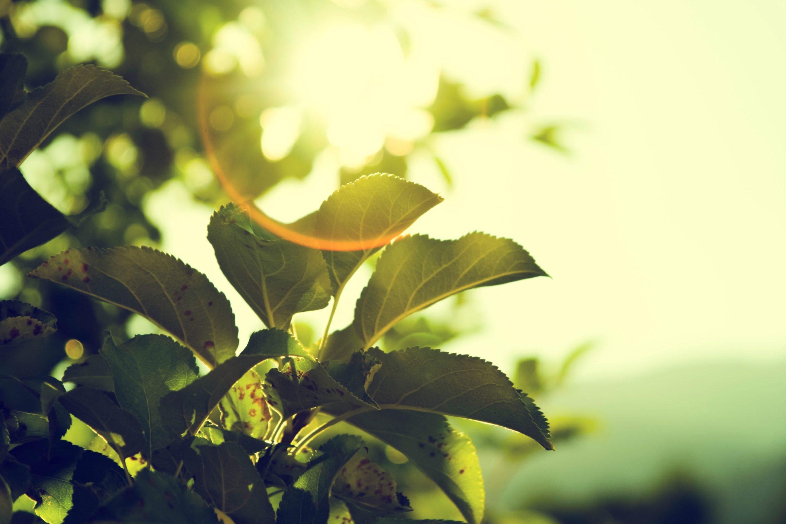 Green Hydrogen Future